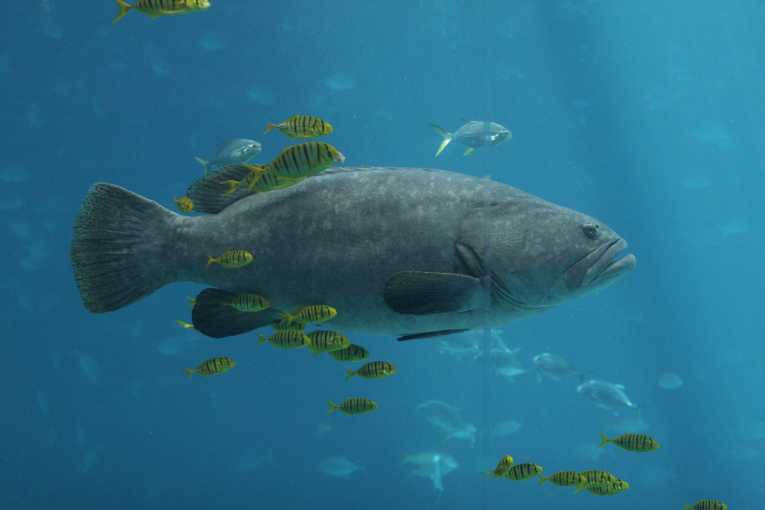 less_big_fish_more_small_fish_202