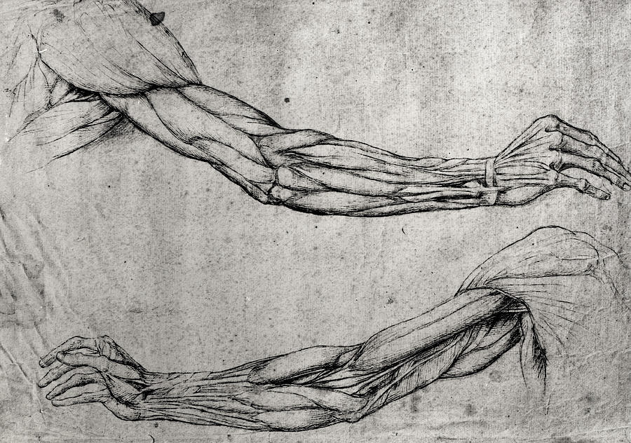 study-of-arms-leonardo-da-vinci